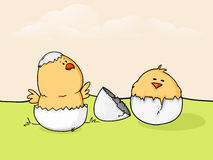 Cute chicks for Happy Easter celebration. Royalty Free Stock Photo