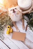 Cute chihuahua brown dog sitting relax with flower notebook came. Ra and beach hat on white vintage wooden floor travel and vacation concept Stock Photos