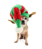 A cute chihuahua in a christmas hat Royalty Free Stock Photo