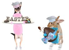 Cute chihuahua dog chef have bake easter letters and cute bunny have bake big easter egg stock photos
