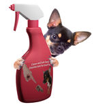 Cute Chihuahua dog have clean spray between the legs, Isolated o Royalty Free Stock Photos