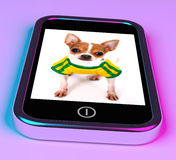 Cute Chihuahua Dog On Mobile Phone Stock Photos