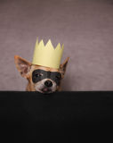 A cute chihuahua with a mask and crown on Stock Photos