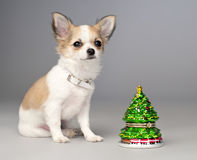 Free Cute Chihuahua Puppy And Toy Christmas Tree Royalty Free Stock Images - 17374689