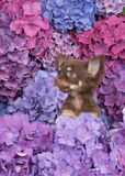 Cute chihuahua puppy dog between flowers Stock Photography