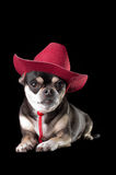 Cute Chihuahua in Red Cowboy Hat. Cute chihuahua dressed in red cowboy hat isolated on black background Royalty Free Stock Image