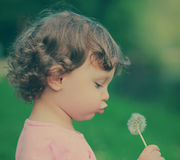 Cute child blowing on dandelion Royalty Free Stock Images