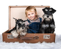 Cute child and dogs Royalty Free Stock Image