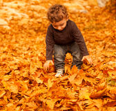 Cute child in fall forest Royalty Free Stock Photo