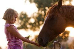 Cute child feeding her handsome horse. Beautiful girl and her handsome horse, a senior portrait. Taken during sunset Royalty Free Stock Image