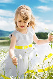 Cute child girl at camomile field Stock Image