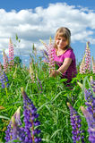 Cute child girl collects summer lupine flowers Stock Photography