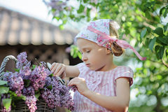 Cute child girl cutting lilacs in spring garden Royalty Free Stock Image