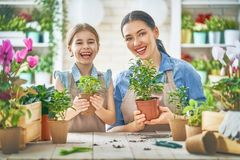 Happy family in spring day. Stock Photos