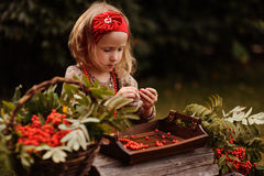Cute child girl making rowan berry beads in autumn garden Royalty Free Stock Photography