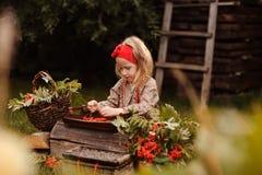 Cute child girl making rowan berry beads in autumn garden Stock Image