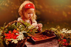 Cute child girl making rowan berry beads in autumn garden stock photos