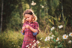 Cute child girl picking flowers outdoor on summer field, cozy mood Royalty Free Stock Photo