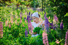 Cute child girl picking lupin flowers for bouquet on summer field Royalty Free Stock Photography
