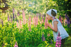 Cute child girl smells lupin flowers on summer field Royalty Free Stock Images
