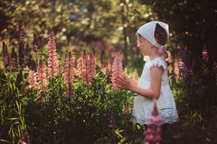 Cute child girl in white shirt and headband playing on summer lupin field Stock Photos