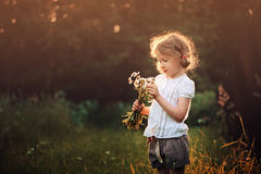 Cute child girl with wild flowers on summer sunset field Royalty Free Stock Image