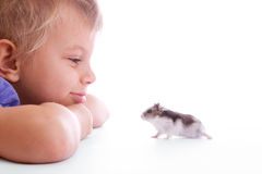 Cute child with hamster. Cute child with small gray hamster Royalty Free Stock Photography