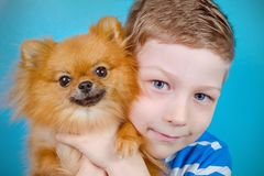 Cute child is hugging with love his lovely pet dog pomeranian stock photography