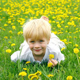 Cute Child Laying in Meadow of Dandelion Flowers Royalty Free Stock Photography
