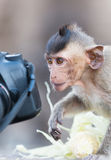 Cute child monkey looking camera Royalty Free Stock Photography