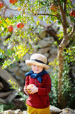 Cute child picking ripe pomegranate in sunny tree garden in Italy Royalty Free Stock Images