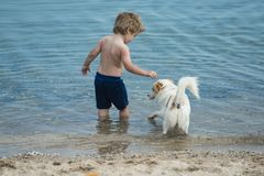 Cute child play with little dog in at seashore. Boy stand in sea water near white dog. Friends going to swim together stock photo