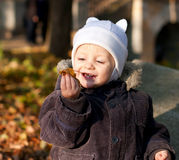 Cute child played by leaves Stock Image