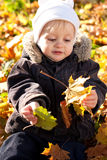 Cute child played by maple leaves Stock Image