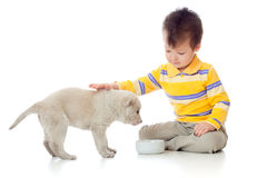 Cute child playing and feeding a puppy royalty free stock image