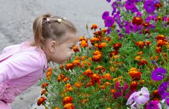 Free Cute Child Smelling French Marigolds In Flower Bed In The Summer Park Royalty Free Stock Photography - 157256927