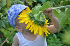 Cute child with sunflower. Child with sunflower on sunny-green background in garden Royalty Free Stock Photos