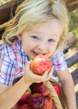 Cute child about to eat a red apple. Cute happy child with a basket of delicious red apples outdoors stock photos