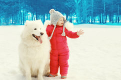 Cute child with white Samoyed dog on snow walking in winter Royalty Free Stock Images