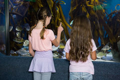 Cute children looking at fish tank Royalty Free Stock Images