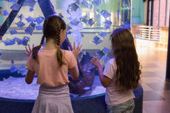 Cute children looking at fish tank Royalty Free Stock Image