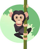 Cute chimp Stock Image