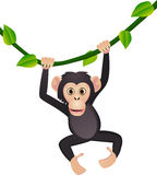 Cute chimp Royalty Free Stock Photos