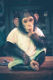Cute Chimpanzee Wear Clothing Sit on Table - Samut Prakan, Thail Royalty Free Stock Image