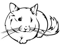 Chinchilla vector Royalty Free Stock Image