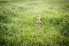 Chocolate bunny hiding in the grass Royalty Free Stock Photography