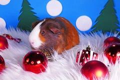 Cute christmas animals. Xmas pet animal guinea pig lop rabbit. Cute christmas animals. Xmas pet animal royalty free stock images