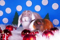 Cute christmas animals. Xmas pet animal guinea pig lop rabbit. Cute christmas animals. Xmas pet animal stock photo