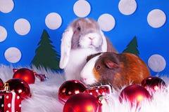 Cute christmas animals. Xmas pet animal guinea pig lop rabbit. Cute christmas animals. Xmas pet animal royalty free stock photos