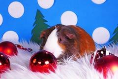Cute christmas animals. Xmas pet animal guinea pig lop rabbit. Cute christmas animals. Xmas pet animal royalty free stock photo